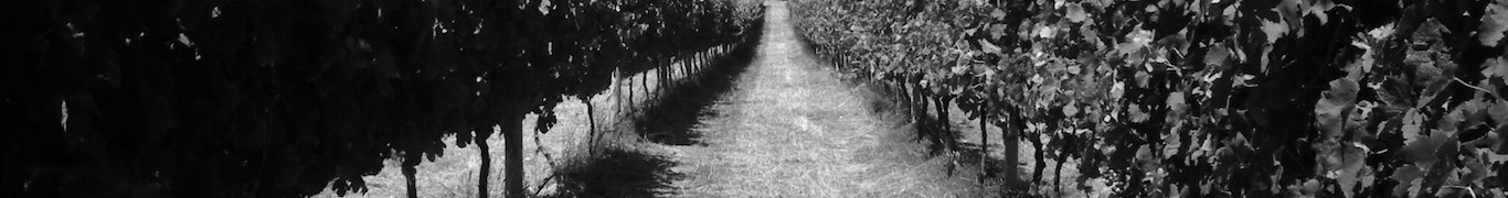 Margaret River Winery McLeod Creek Wines Vineyard