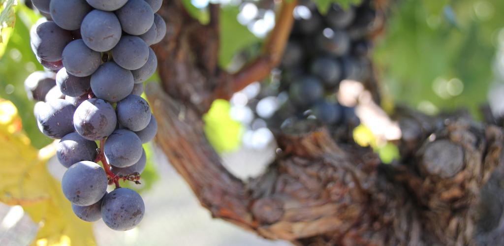 Family run winery set in a European style vinyard